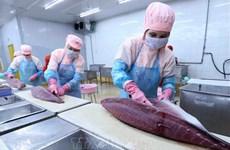 Vietnam lucha contra la IUU para fomentar ventas de atún a la UE