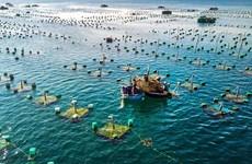 Desarrollan sincrónicamente la acuicultura marina de Vietnam