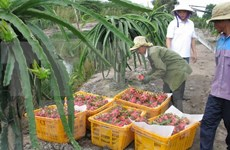 Vietnam y Australia realizan primer diálogo de alto nivel sobre políticas agrícolas