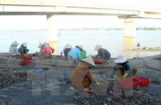 Vietnam: La acuicultura enfrenta desafíos ambientales