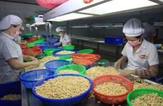 Vietnam y Mozambique cooperan en cultivo de anacardo