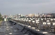 Vietnam acelera tratamiento de dioxina en aeropuerto de Da Nang