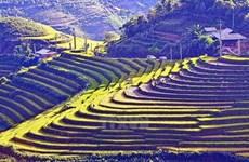 Da frutos cooperación turística en región noroccidental de Vietnam