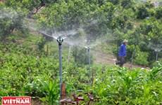 Granja de verduras limpias Hoa Vien