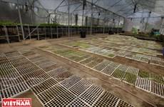 Granja de vegetales orgánicos Canh Cam