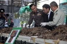 Policía tailandesa incauta cantidad récord de escamas de pangolín