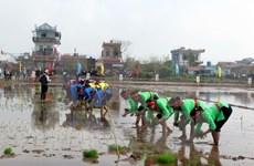 "Vicepresidenta vietnamita asiste al festival ""Tich Dien"" en Nam Dinh"