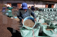 Brasil importará café robusta de Vietnam