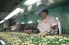 Vietnam prevé ingreso multimillonario de exportaciones de anacardo