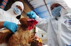 Vietnam implementa medidas preventivas contra gripe aviar A/H7N9