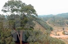 Vietnam establece base de datos para gestión forestal