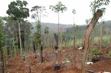 Vietnam estudia medidas de protección del medio ambiente