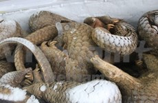 Asistencia estadounidense para combatir contrabando de animales silvestres en Vietnam