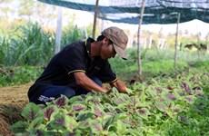 Japón apoya desarrollo de agricultura limpia en Ciudad Ho Chi Minh
