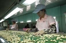 Industria vietnamita del anacardo enfrenta desafíos