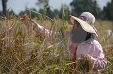 Inauguran en Vietnam conferencia regional sobre seguridad alimentaria