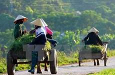 Fondo Internacional de Desarrollo Agrícola apoya a agricultores vietnamitas