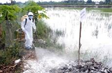 Vietnam se blinda ante la propagación de gripe aviar en países vecinos