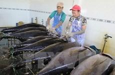 Provincia vietnamita impulsa desarrollo sostenible del sector acuático