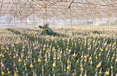 Empresa japonesa invierte en floricultura en Vietnam