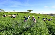 Vietnam impulsa el desarrollo de agricultura orgánica