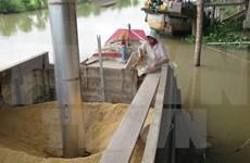 Prohibición de Filipinas causa inquietudes entre exportadores vietnamitas de arroz