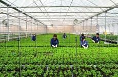 Ciudad centrovietnamita creará siete zonas agrícolas de alta tecnología