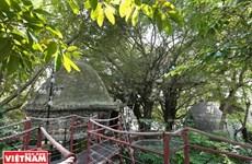 Casas sobre árboles en Hanoi