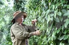 Empresas japonesas invierten en agricultura orgánica en Vietnam