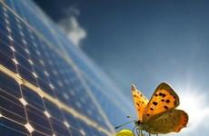 Desarrolla cooperación en la esfera de energía eólica y solar en Ninh Thuan