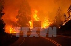 Vietnam expresa solidaridad con Portugal por incendio forestal