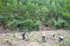 Vietnam fomenta protección y desarrollo forestal