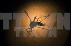 Malasia registra 122 muertos por dengue