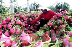 Vietnam busca exportar más verduras y frutas a China
