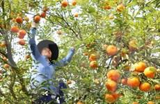 Japón por impulsar cooperación con ciudad vietnamita en agricultura
