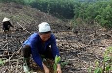 Debaten en Hanoi sobre mejoramiento de gestión forestal en región de Mekong