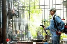 Vietnam registra más de 90 mil casos de dengue