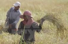 Ministros de Agricultura de subregión del Mekong se reúnen en Camboya