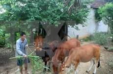 Localidades desfavorecidas en Vietnam se benefician de asistencia del gobierno