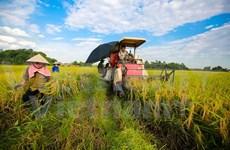 Exportaciones de productos agrícolas, acuícolas y silvícolas de Vietnam registran notable incremento
