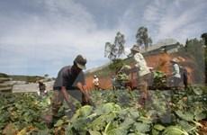 Vietnam reconoce a campesinos destacados en proceso nacional de renovación