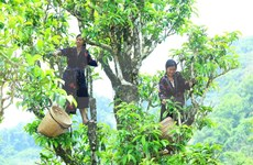 Tailandia busca reforzar cadenas de suministro de productos agrícolas