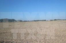 ADB concede asistencia millonaria a Vietnam para desarrollo de urbes verdes