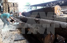 Vietnam reporta ingreso multimillonario por exportación de productos madereros