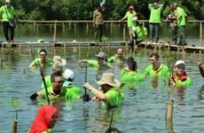 ASEAN por impulsar conservación medioambiental mediante ampliación de manglares