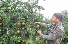 Vietnam y Bélgica impulsan cooperación en agricultura
