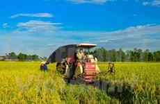 Vietnam por lograr en 2020 un crecimiento agrícola de tres por ciento