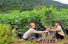 Plantan siete mil árboles en humedal de Lang Sen