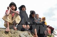 Ejército de Myanmar investiga una fosa común en estado de Rakhine