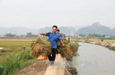 Provincia vietnamita de Quang Ninh avanza en construcción de nuevas zonas rurales